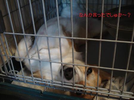 2008_0910_230811dsc03258p