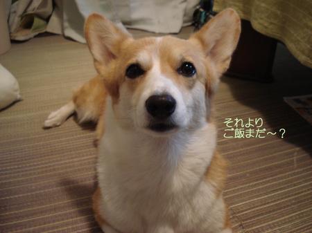 2008_1006_220510dsc03427