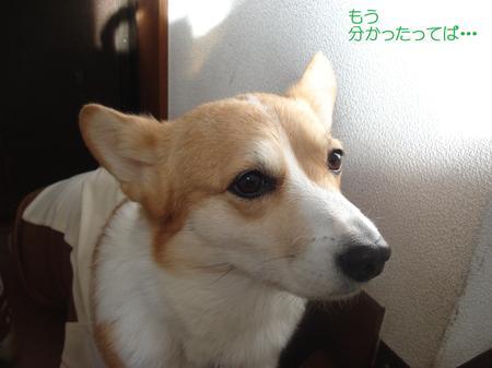 2008_1201_102105dsc03679