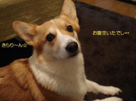 2008_1211_225344dsc03721